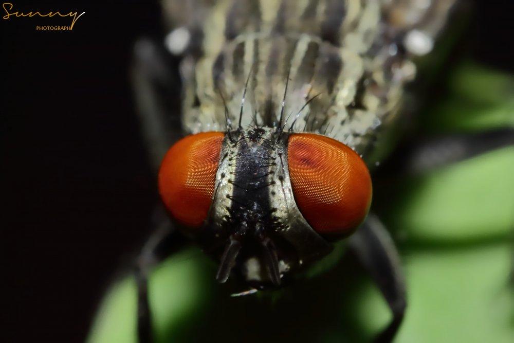 Fly08.jpg
