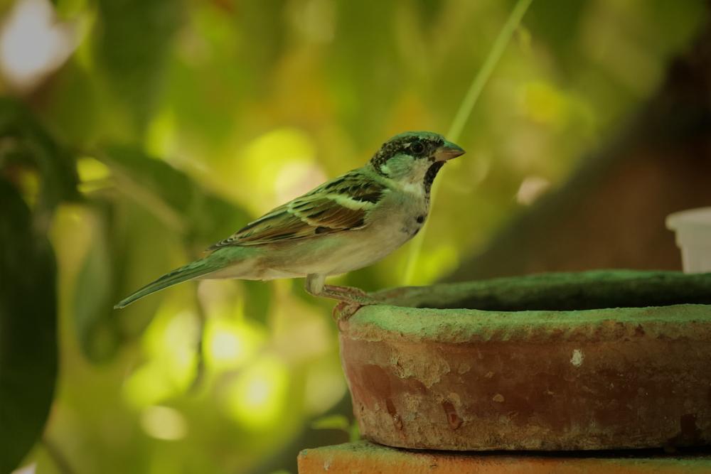 SparrowBef.png