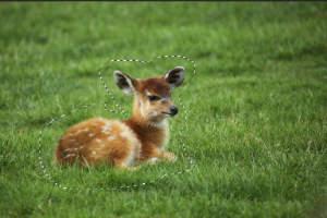 deer1.jpg.59e29e6fc12894f521f5d8f0b467329b.jpg