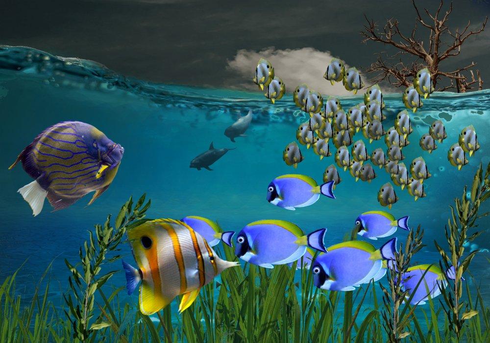 59fa2b8c247dd_Fantasyfish.thumb.jpg.ced87ba736c02a8239dcc03f9d43e71c.jpg