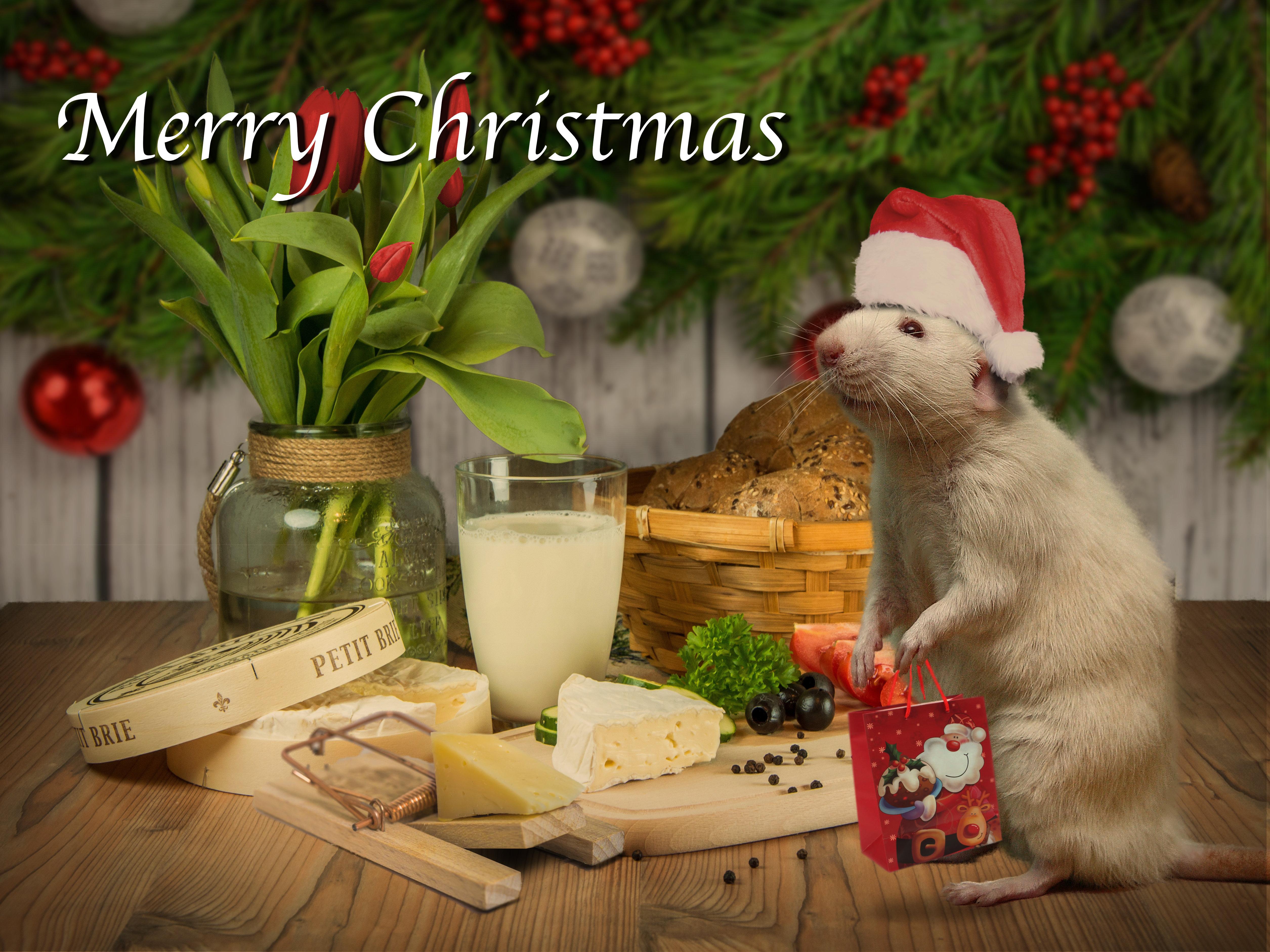 christmas card web 2017jpg - Christmas Forum