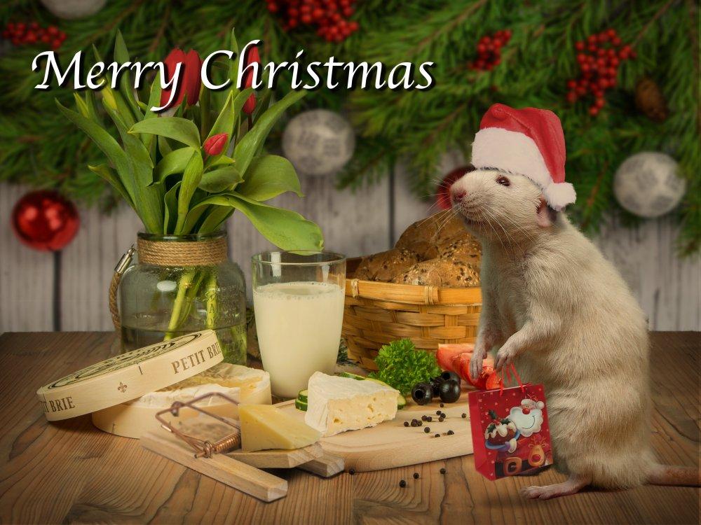 Christmas card web 2017.jpg