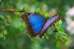 butterfly.jpg.5b35649349b8f5be7f94be1e61c3dabd.jpg