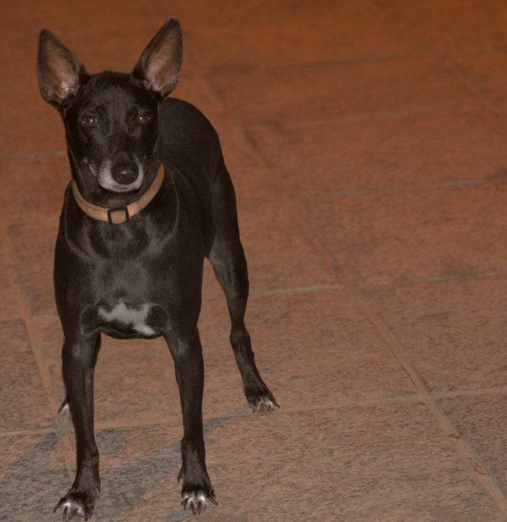 dog2.thumb.jpg.d0ab8d4ffe015f0ba54b5df90ca443c6.jpg