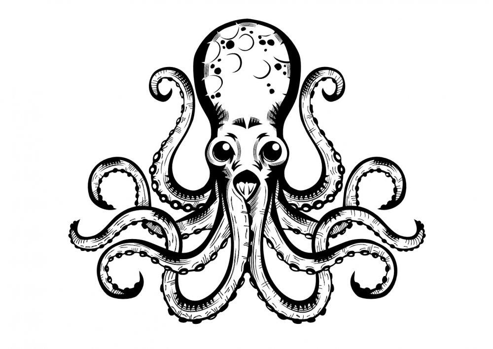 Octopus-1000.jpg