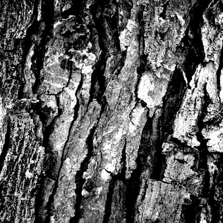 bark 1 flat.jpg