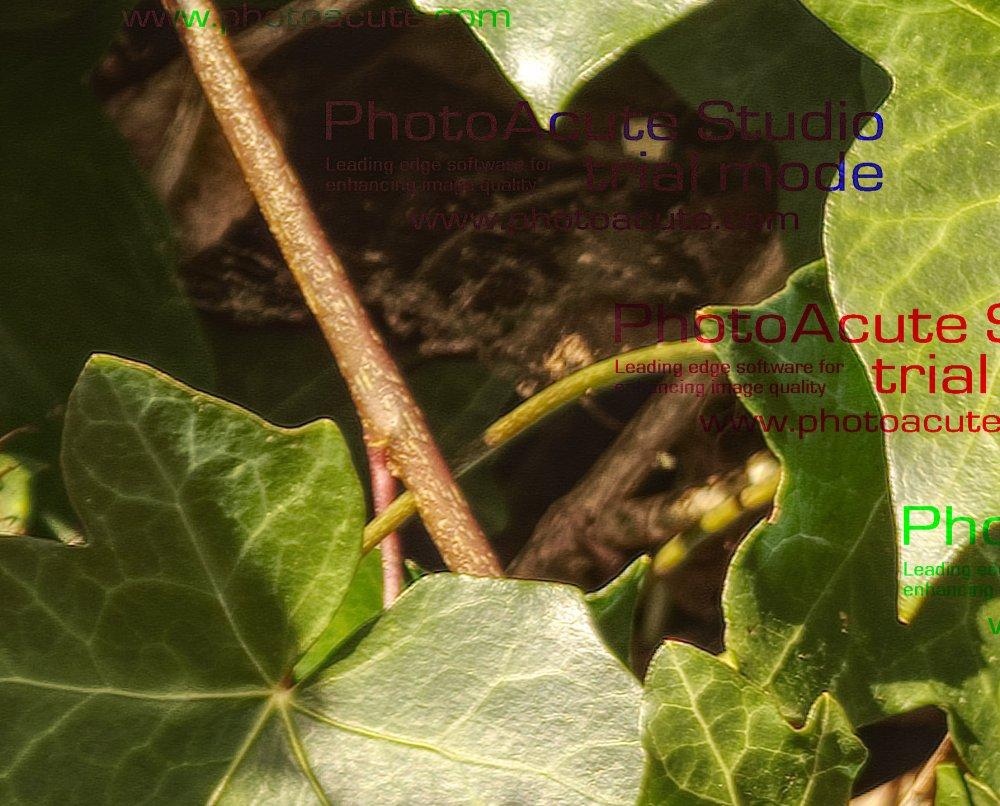 CropAffHDR.thumb.jpg.da83e9ef43b95a5767c36e9b0018023a.jpg