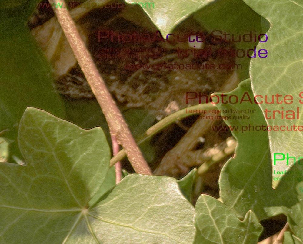 CropNikHDR.thumb.jpg.a5f8b645144466f6dadbed37d3ab0307.jpg