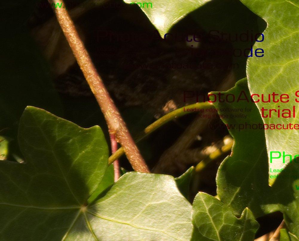 CropPhotoAcute.thumb.jpg.121337aadb004f13211540df8e606f19.jpg