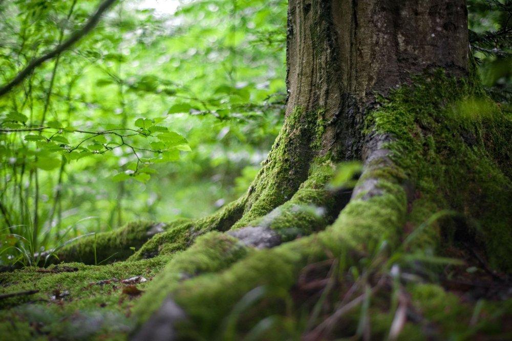 environment-forest.jpg