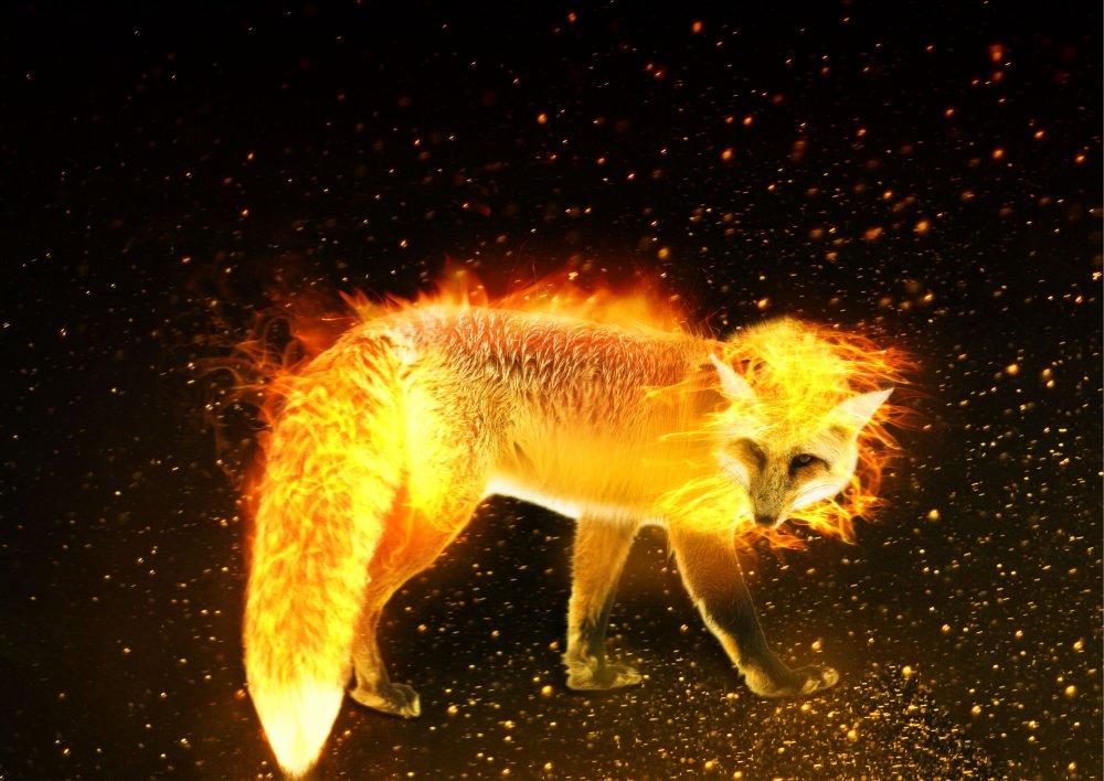 firefox.thumb.jpg.584e5d2cf0d3840e2a970f7982e0865f.jpg