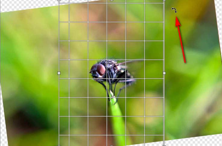 rotate2.jpg.4dae8880d3bb5ba639532bcfcc65c89e.jpg