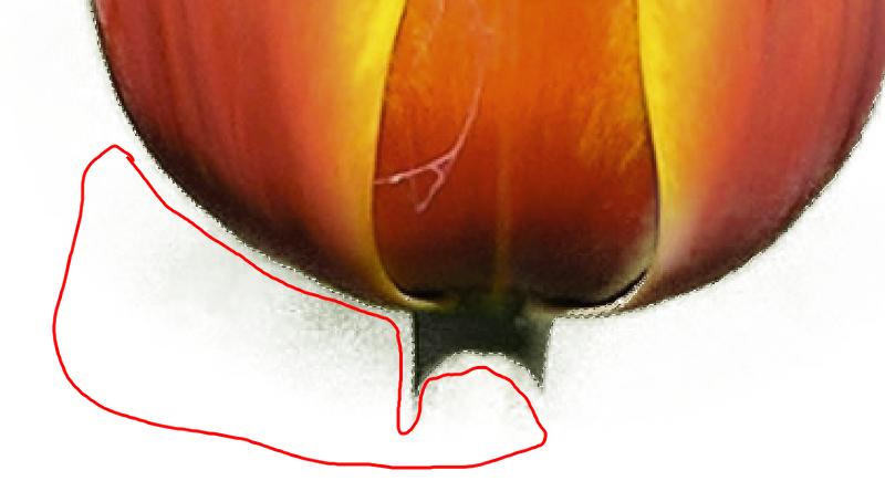 tulip.png.dbafb112286fa221e1f2233b78f2ba46.png