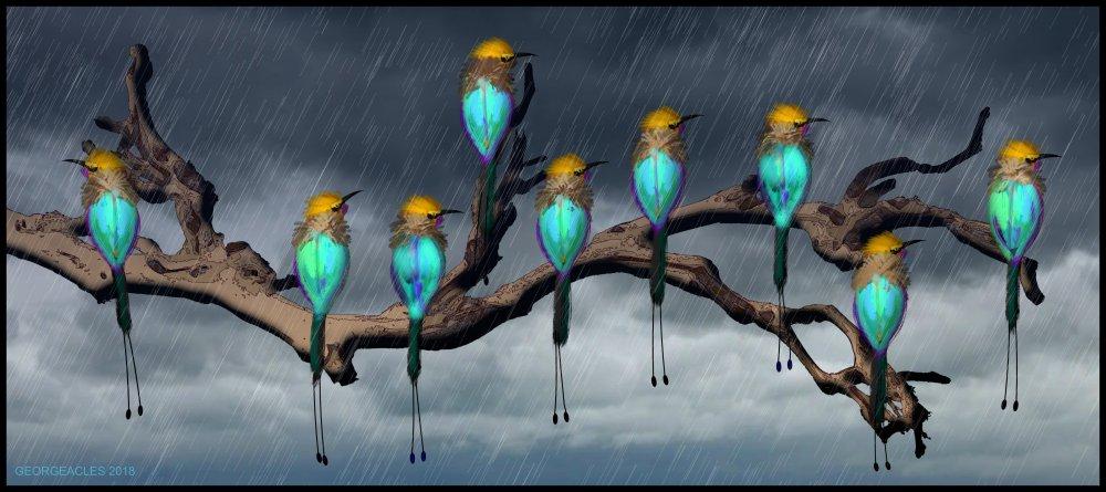 1952525428_RainbowBeeEaters.thumb.jpg.d716d5979fbf4fafaae3f5daaebf2cbf.jpg