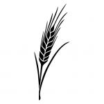 Pšenda