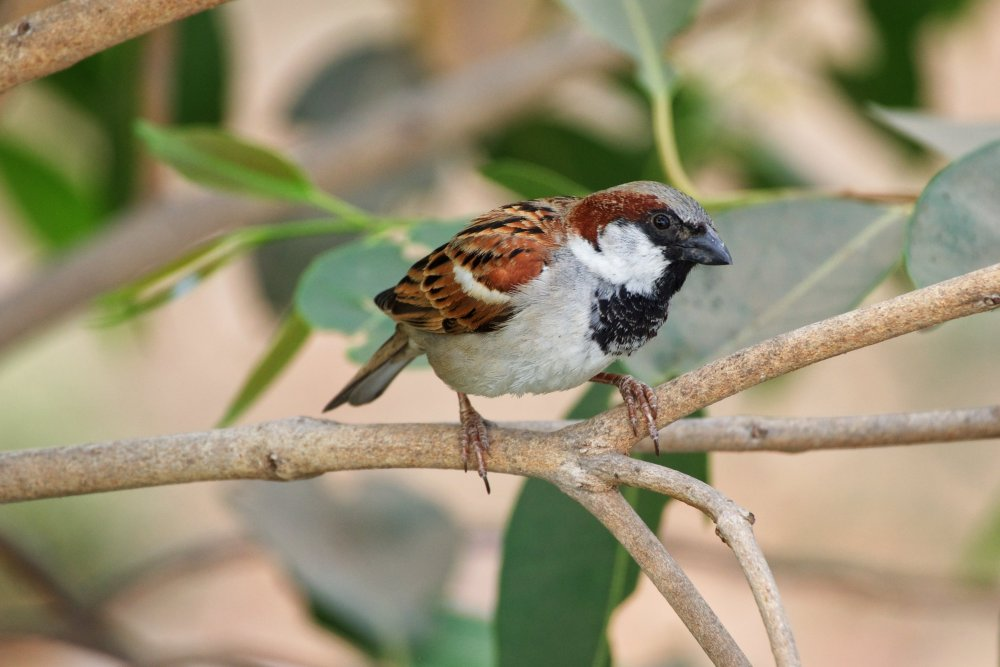 Sparrow-3.jpg