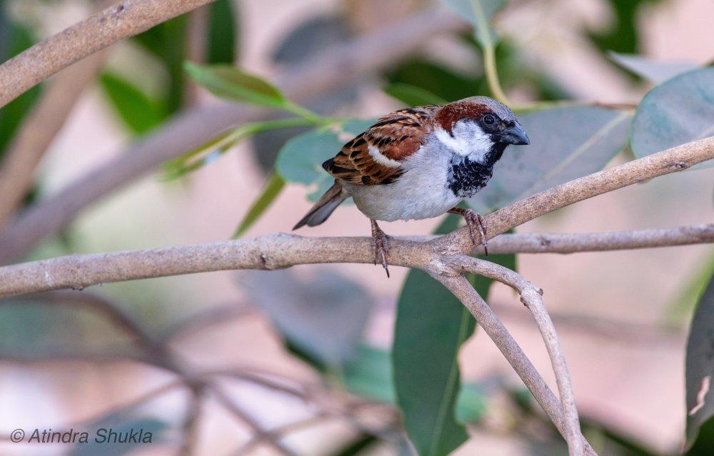 Sparrow-4.jpg