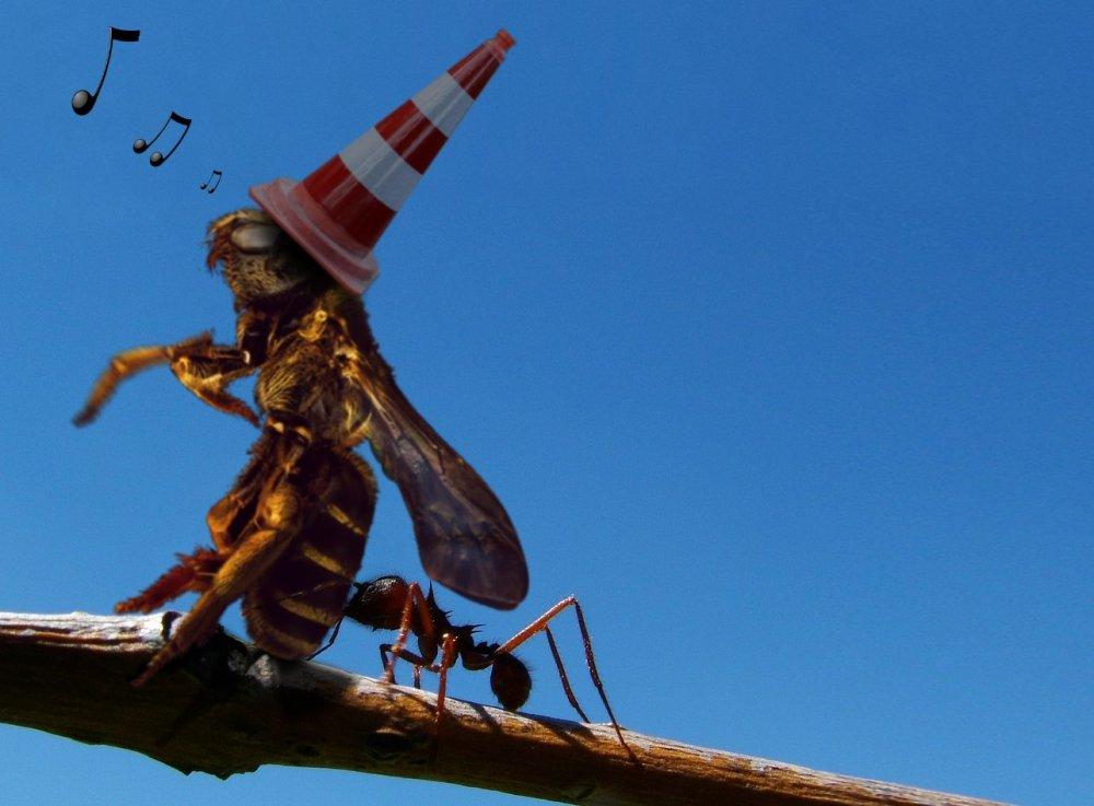drunk bee.jpg