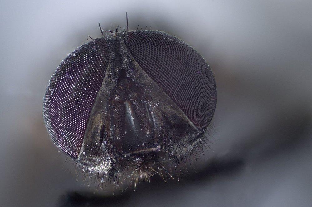 small bee 10X.jpg