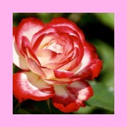 pink.jpg.9b908ed037d1d92d123c856a1fb6f3a8.jpg