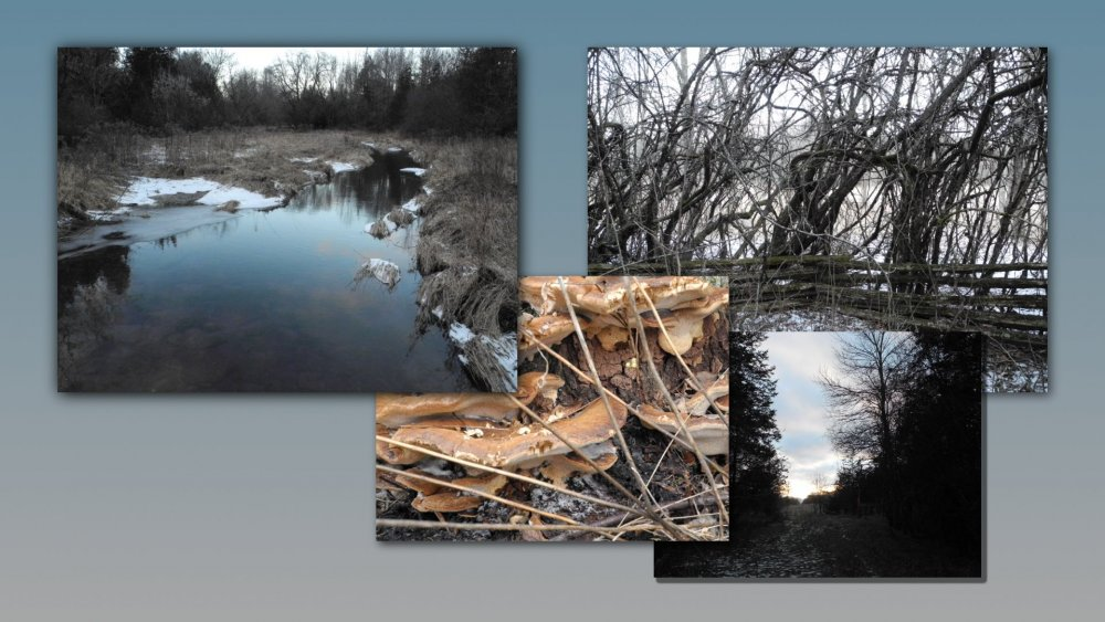 Potter's Creek Collage - 1920x1080.jpg
