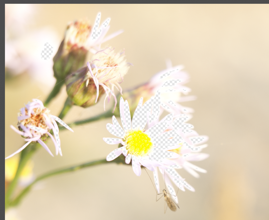 Bildschirmfoto 2019-01-30 um 13.16.26.png