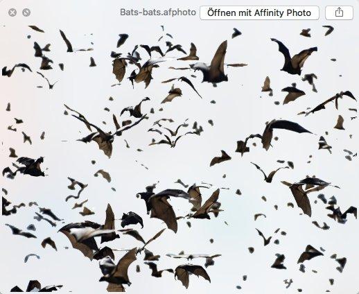 bat_swarm.jpg.b720d10fb098806fb5b3d7dd6fc91da8.jpg