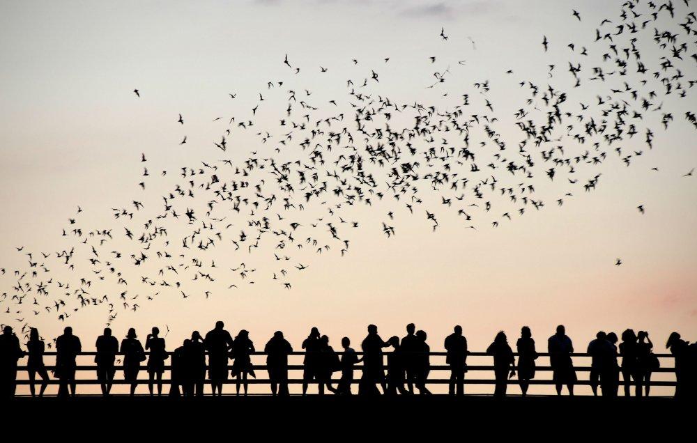 bat_swarm.thumb.jpg.e7c3d5b724d495273e825a160111763d.jpg