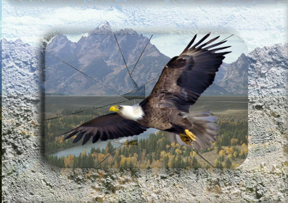Орел за стеклом.jpg