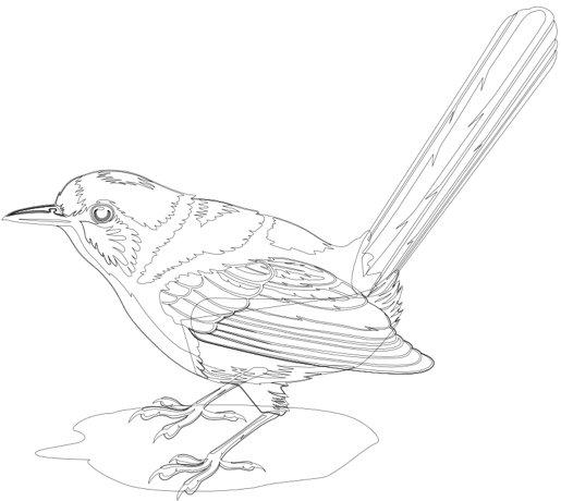 bluebird_outline.jpg.2b2975939370ec49fc47aaa22b99bf5f.jpg