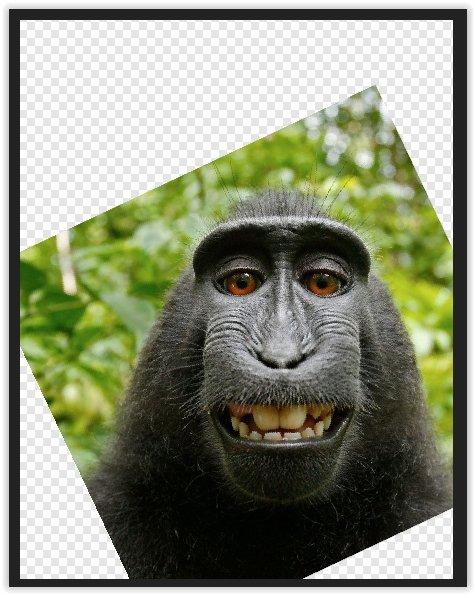 monkey2.jpg.ea5352ce5a69eefa90ee2c7e980bb2fe.jpg