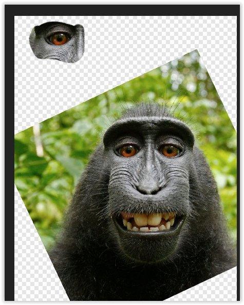 monkey3.jpg.69eec0a31a72b72153fbc0b2f2f19a2b.jpg