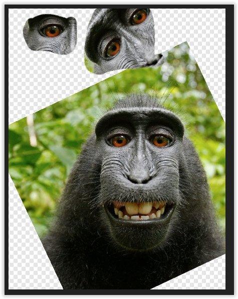 monkey4.jpg.8ac2ff8e2efbb85bb4ec671f950e09b6.jpg