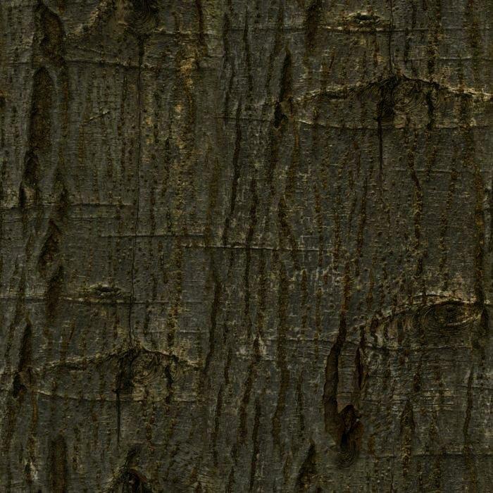 Generic tree A5 - A6.jpg