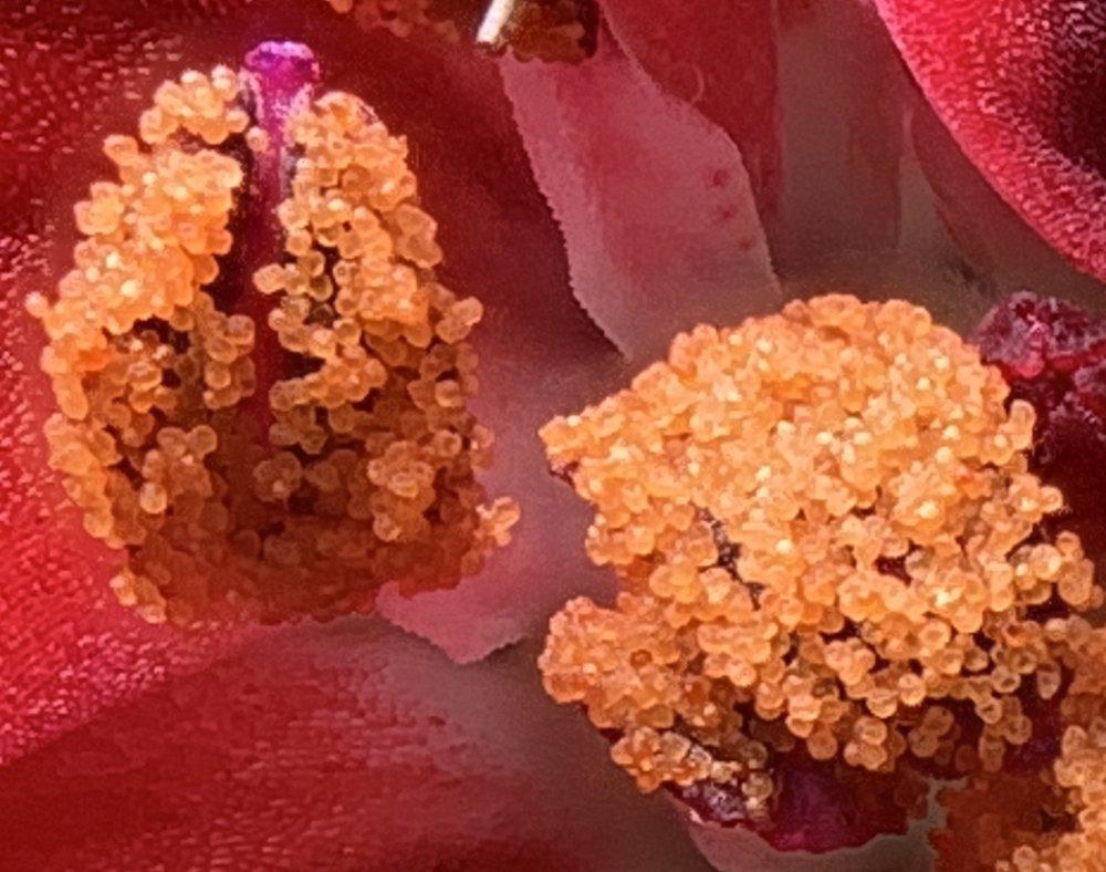 geranium6cropped4.jpg