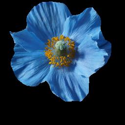 Flower.png.575dd85565449f639f1e68cc68e22ef9.png