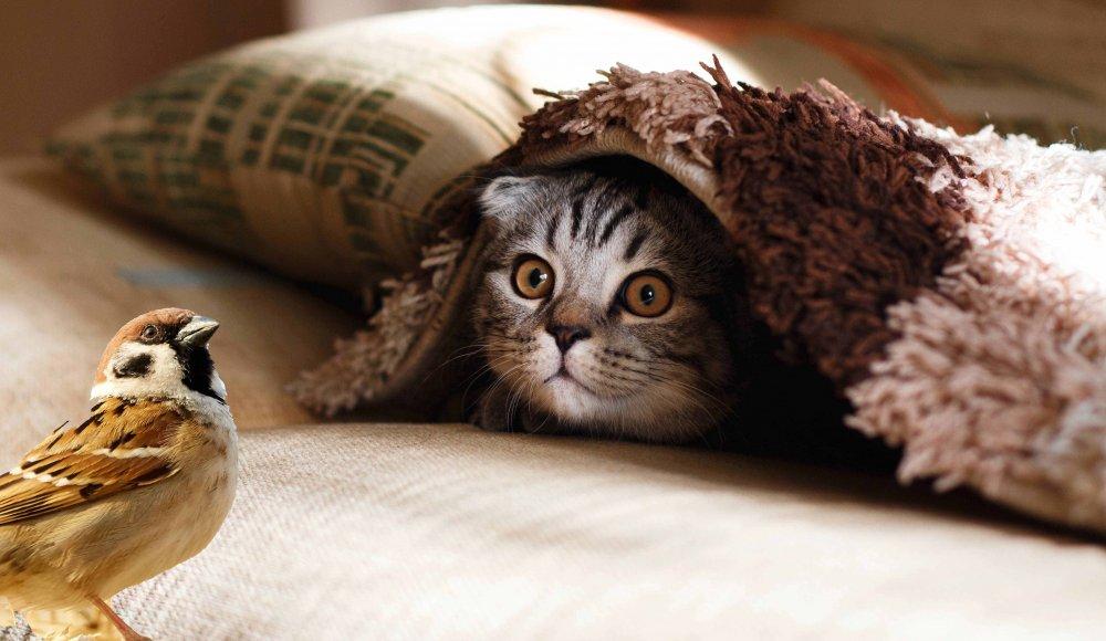 cute cat pre dodge&burn.jpg