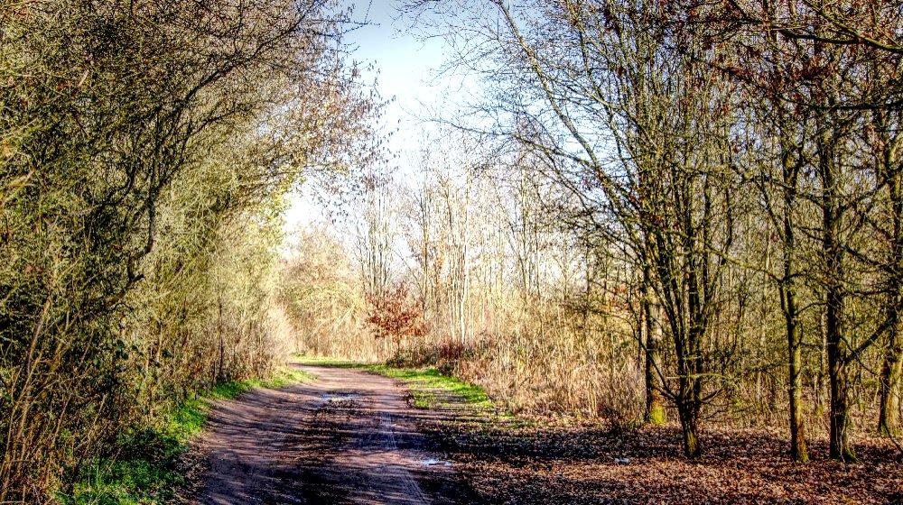 Local Nature Walk.jpg