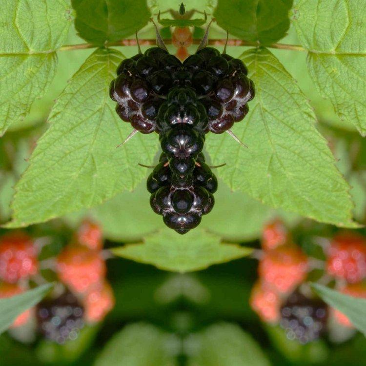 deadly berries.jpg