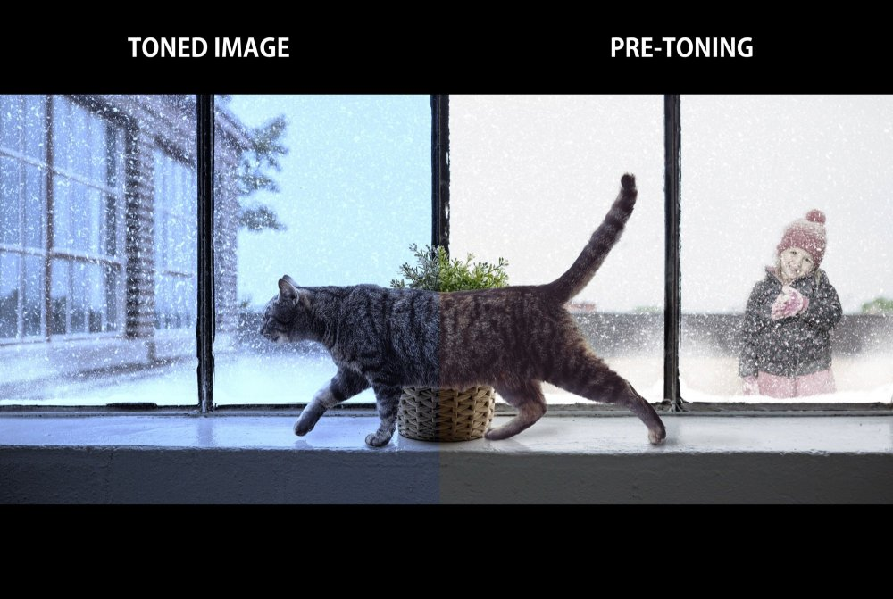1814618194_CatWindow-TONING.thumb.jpeg.e5a51e06b19b457747b8dd62e9843319.jpeg