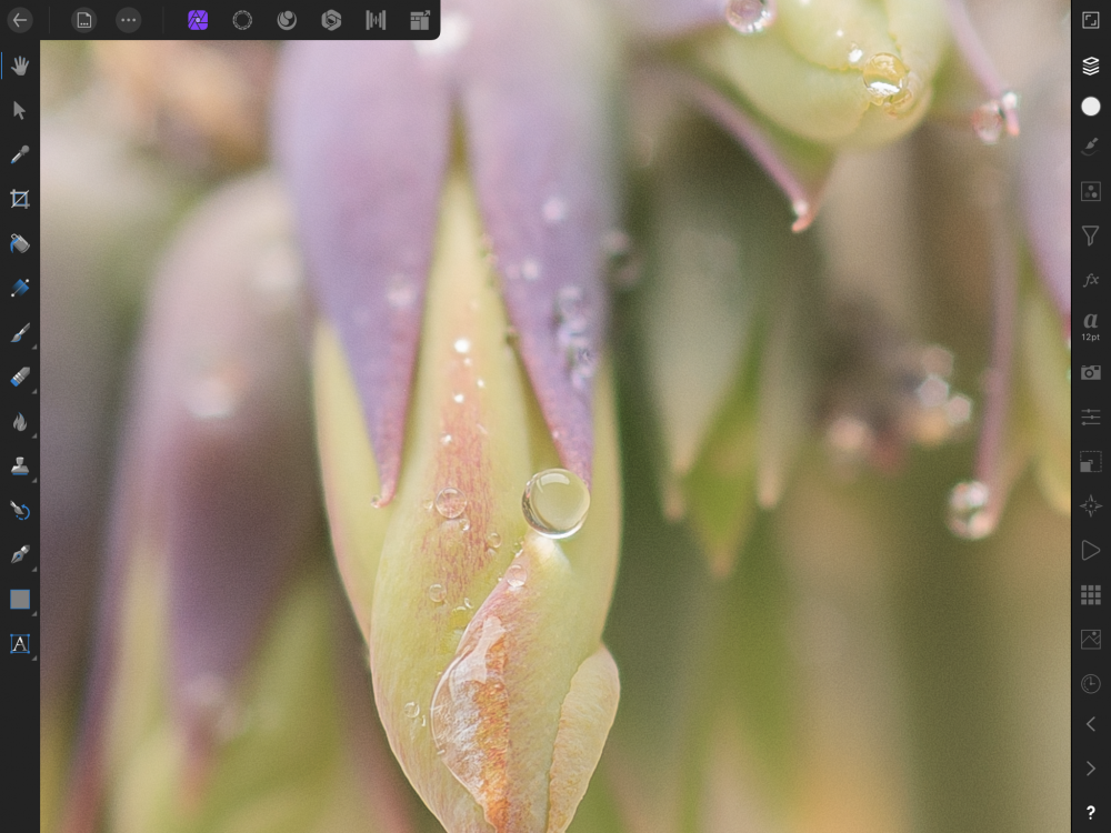Focus merge iPad.png