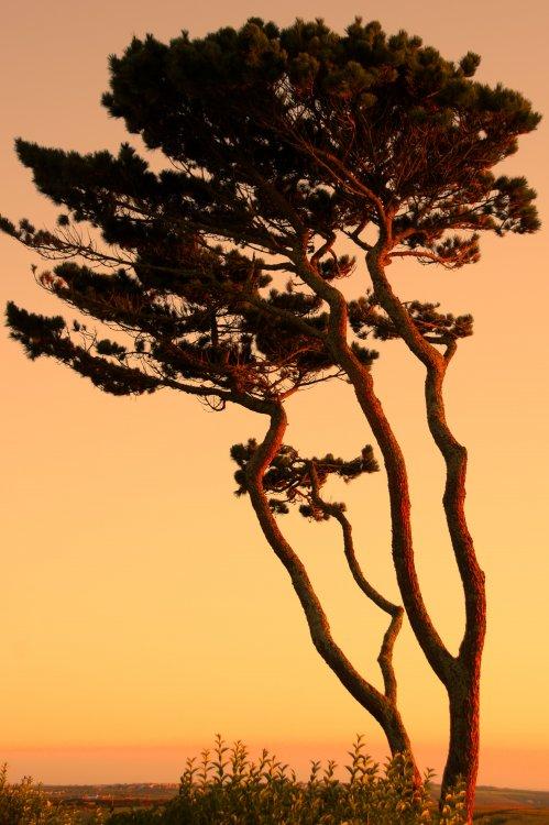 tree_sunset_light.jpg