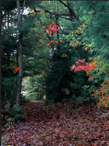 Autumn Woods Edit #1.png