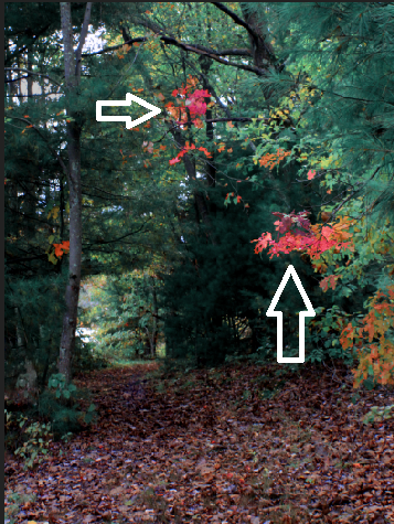 Autumn Woods Edit #2.png