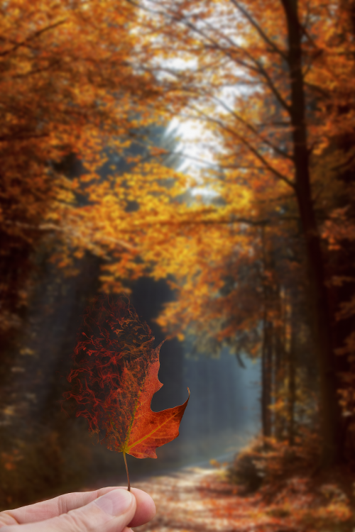 Forest with leaf.png