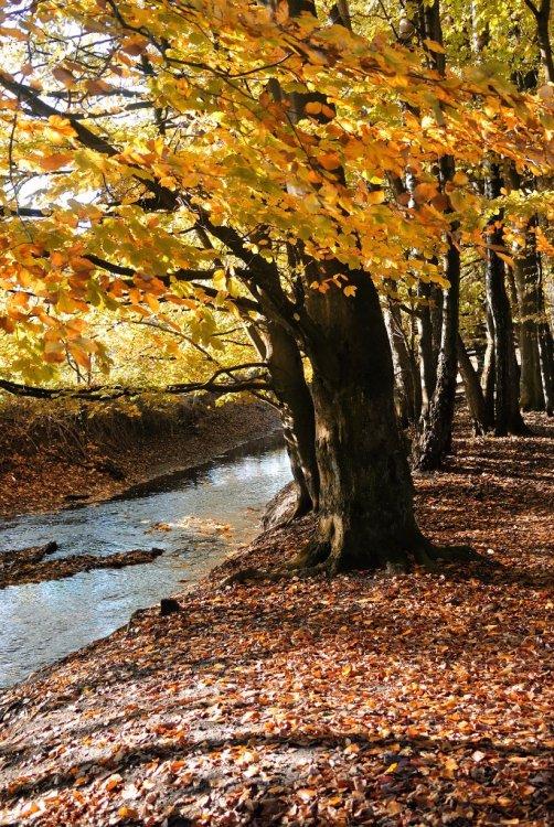 november_fall.thumb.jpg.af20af6290664d97ef0665c50b338c84.jpg