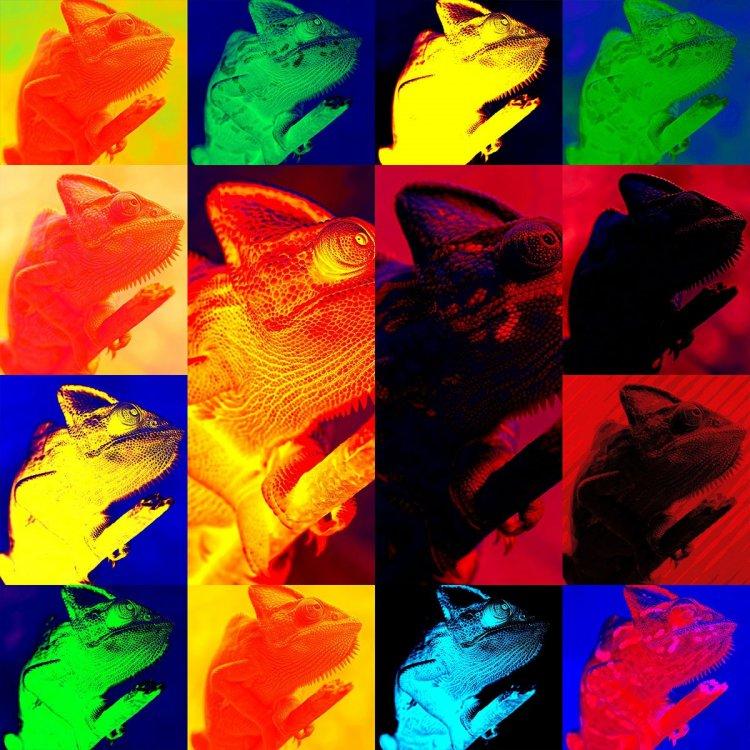1-elathi-affinity-photo-macro.thumb.jpg.769a653f46683a453a0510b319aa080c.jpg