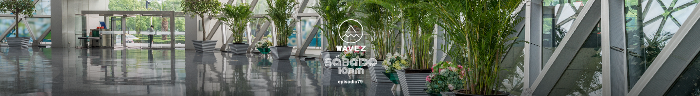 Wavez diseño 2.png