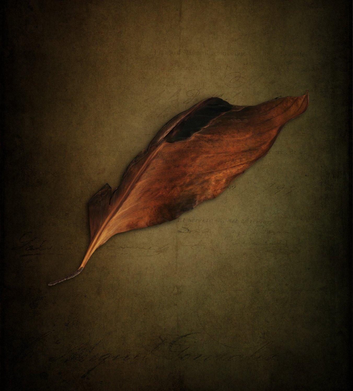A leaf 2.jpg