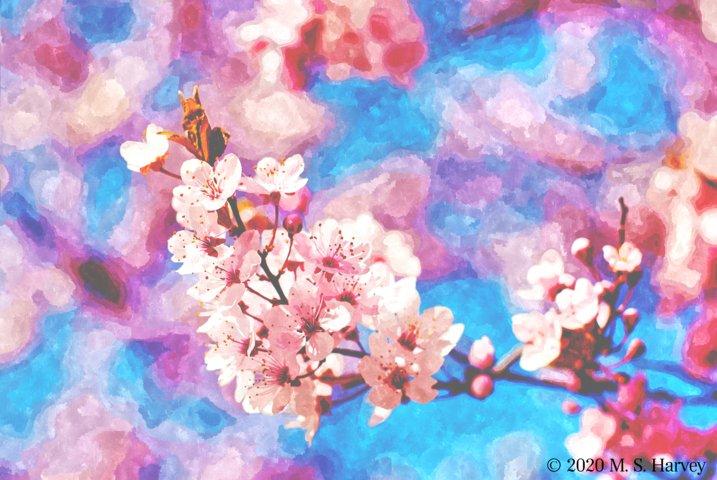 Cherry blossom water (FILEminimizer).jpg